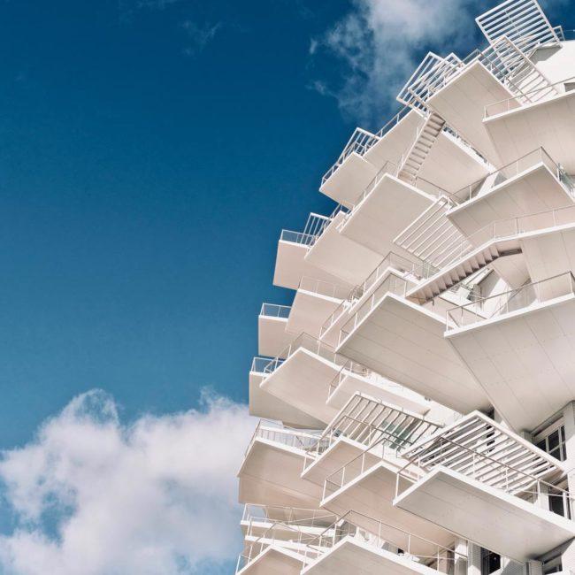 Arbre Blanc Montpellier
