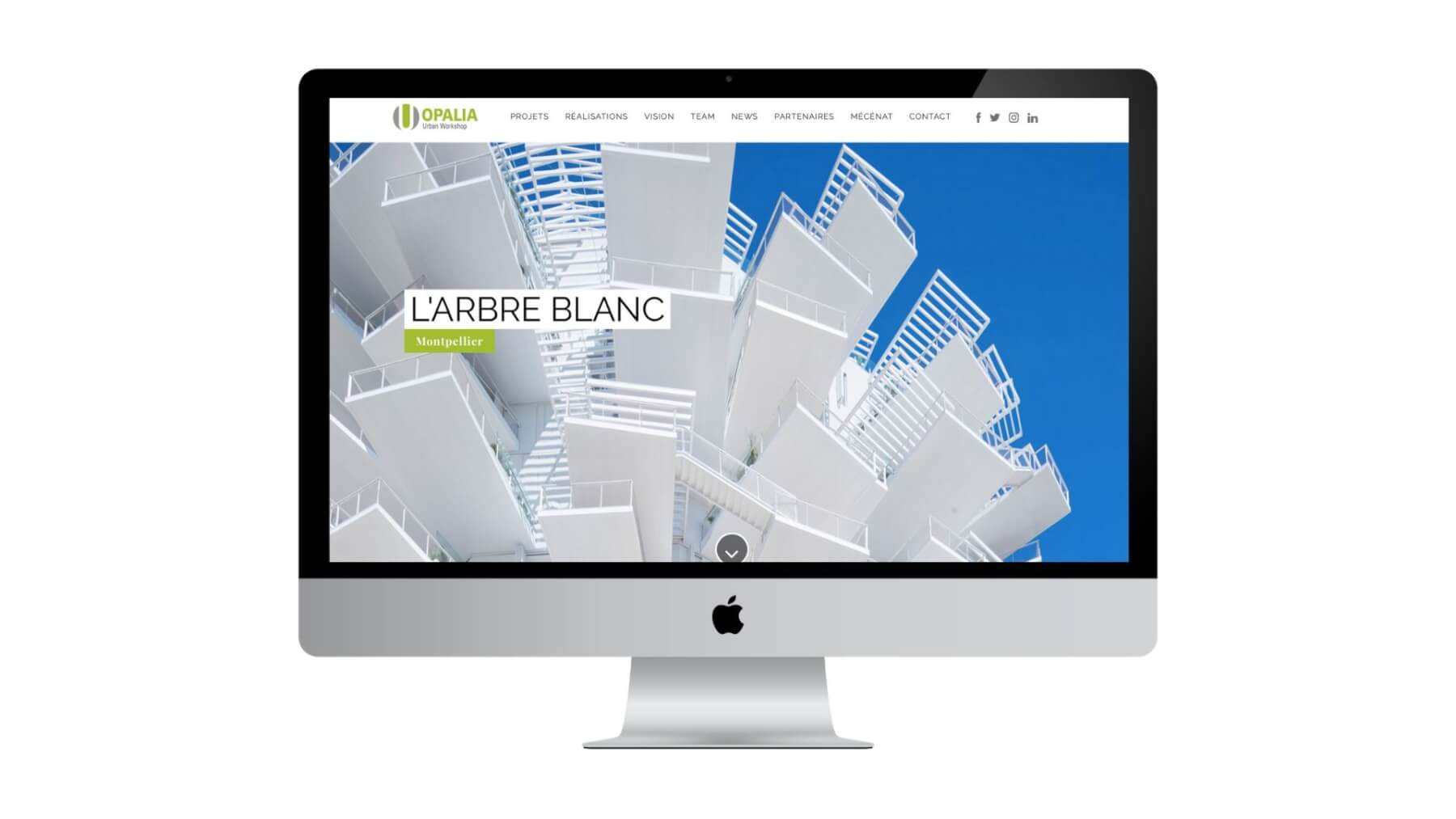 site_internet_opalia_arbre_blanc